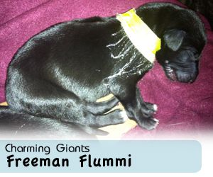 Charming Giants Freeman Flummi